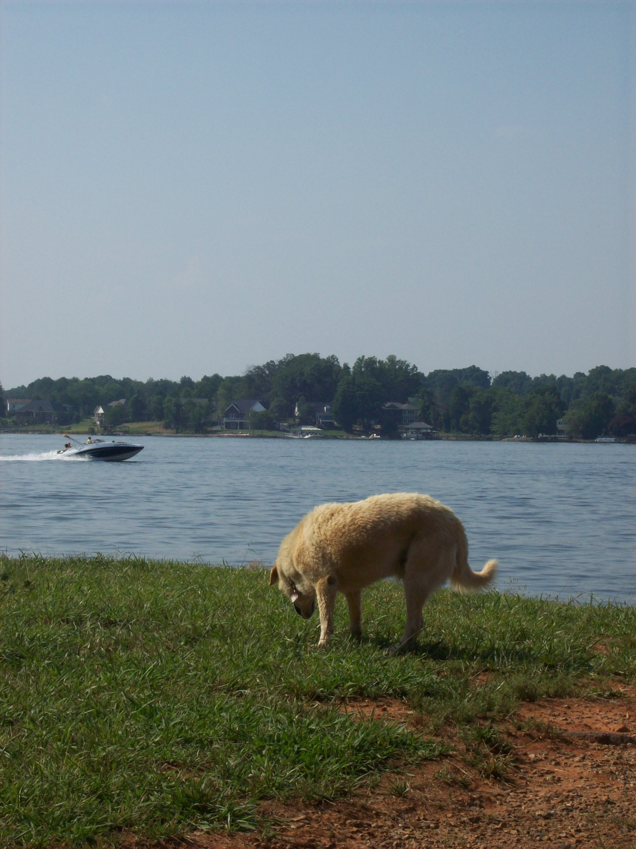 Lake Norman waterfront lots